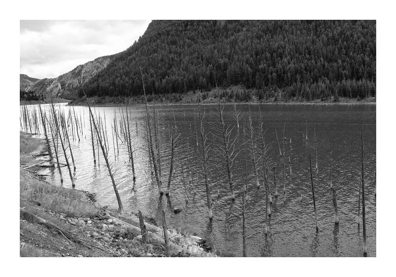 Earthquake Lake,  Montana (not in Yellowstone, but close enough)